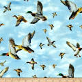 Duck Lake Ducks In Flight Sky Blue