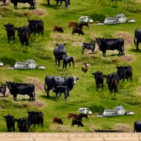 Farm Animals Cows Green