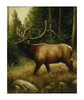 "Penny Rose Majestic Outdoors 2 Digital Elk 35"" Panel"