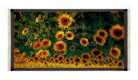 "QT Fabrics Digital Tuscan Sunflower 24"" Panel Multi"