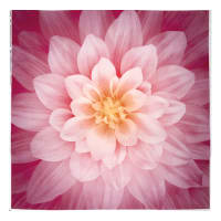 "Dream Big Digital 44"" Panel Floral Wild Rose"