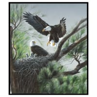 "One Of A Kind Eagles Nest 36"" Panel Multi"