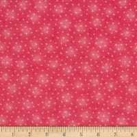 Starlet Star Coral