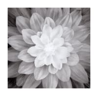 "Hoffman Digital Dream Big Flower 43""Panel Onyx"
