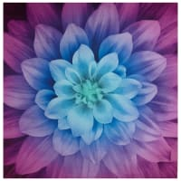 "Hoffman Digital Dream Big Flower 43"" Panel Aurora"