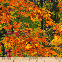 Timeless Treasures Electric Nature Fall Trees Foliage
