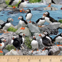 North American Wildlife-Puffins Blue