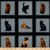 My Pet Family Kitten Pictures Slate/Multi