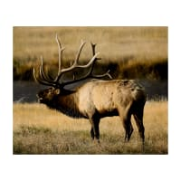 "Kings Camo Elk Panel 43"" X 36"""