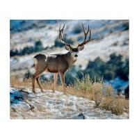"Riley Blake King's Camo Mule Deer 36"" Panel Multi"