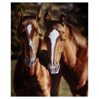 "Penny Rose Horsin' Around Tango And Cash 36"" Panel Multi"