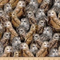 QT Fabrics Nocturnal Wonders Packed Barred Owls Black