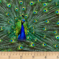 Hoffman Digital Proud As A Peacock Packed Peacocks Peacock