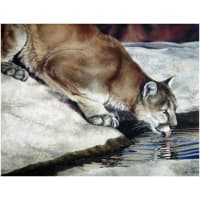 "Penny Rose Wild And Playful Cougar 36"" Panel"