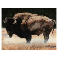 "Penny Rose Wild And Playful Buffalo 36"" Panel"