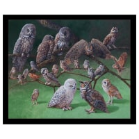 "Owls of North America 24"" Owl Panel Black"
