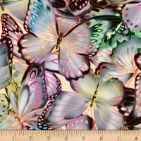 Kaufman Nature Studies Butterflies Grey