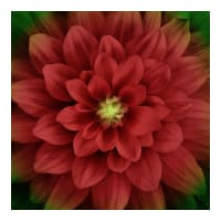 "Hoffman Digital Dream Big 43"" Floral Panel Scarlet"
