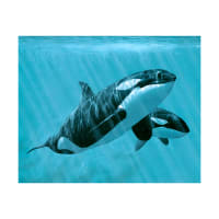 "Mother And Son Orcas 36"" Panel Multi"