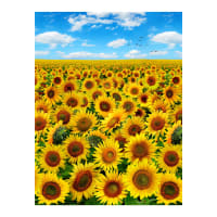 Sunflowers Afternoon Blue