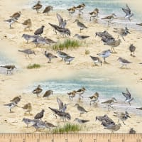 Coastal Dreams Sandpipers Sand