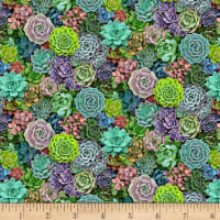 Landscape Medley Small Packed Succulent Multis