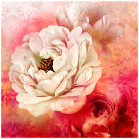 "Royal Beauty Peonies 60"" Panel Cream/Red"