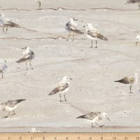 Northcott Swept Away Gulls on Sand Neutral
