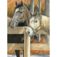 "Color Pencil By Number Kit 8.75""X11.75""-Buck's Pal"