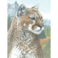 "Color Pencil By Number Kit 8.75""X11.75""-Cougar"