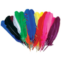 Turkey Quill Feathers 25/Pkg-Assorted