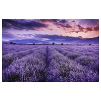 "Northcott Lavender Fields 28"" Panel Purple Lavender"