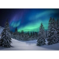 "Hoffman Digital Call Of The Wild 31"" Aurora Borealis Forest Panel Aurora"