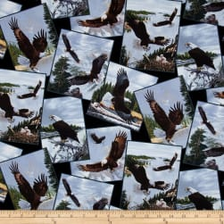 Majestic Bald Eagle Postcards Toss Black Fabric
