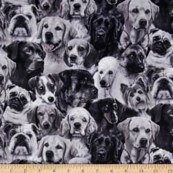 Dog Breeds Packed Dogs Gray