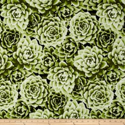 Agave Large Packed Succulents Watercress Fabric