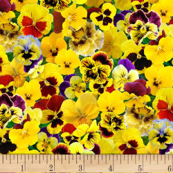 Lovely Pansies Yellow