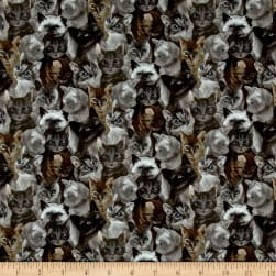 My Pet Family Kitten Collage Slate Fabric