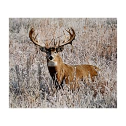 Kings Camo White Tail Deer Panel 43