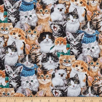Cat Breeds Packed Cats Multi