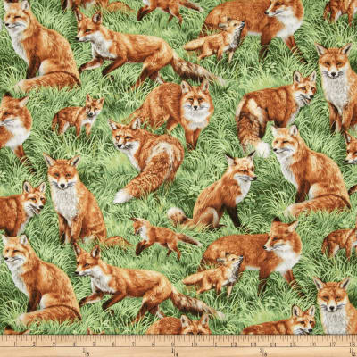 American Wildlife Foxes Multi