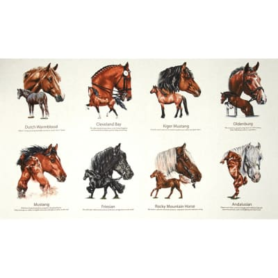 Horse Breeds 24 In. Panel Cream