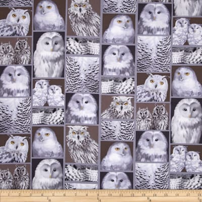 Kanvas The Great North Wilderness Feathered Owlet Silver Grey
