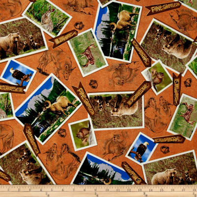 Our National Parks Animal Photos Brown