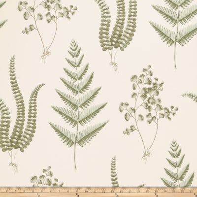 Fabricut 50075w Jocena Wallpaper Fern 01 (Double Roll)
