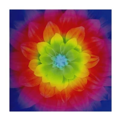 "Hoffman Digital Dream Big Flower 43""Panel Prism"
