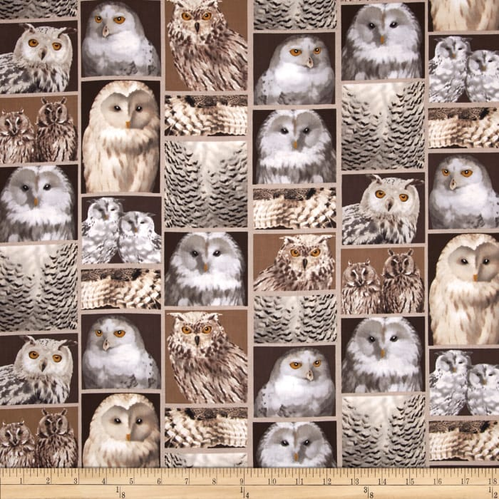 Kanvas The Great North Wilderness Feathered Owlet Natural